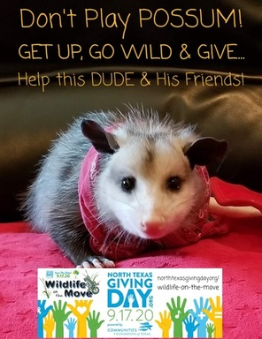 GET UP, GO WILD, & GIVE to Help Dude & Friends!